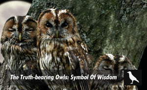 The Truth Bearing Owls