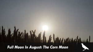 Full Moon In August: The Corn Moon