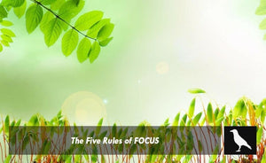 The Five Rules Of FOCUS