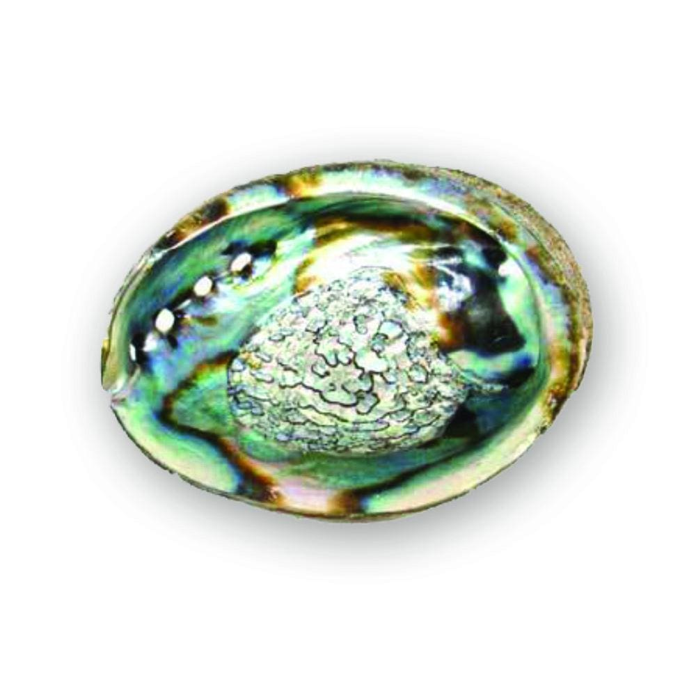 Nature's Rainbow Abalone Shell