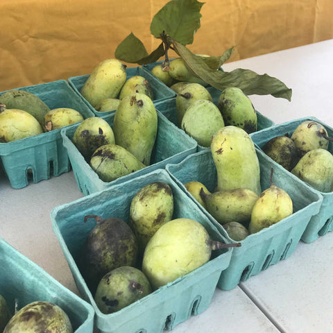 paw paws at the farmers market