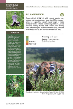 """Flora of the Yellowstone"" Book - Distinctly Montana - 4"