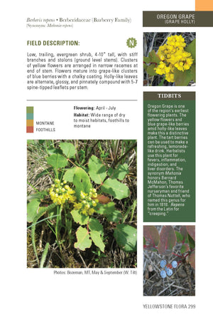 """Flora of the Yellowstone"" Book - Distinctly Montana - 3"