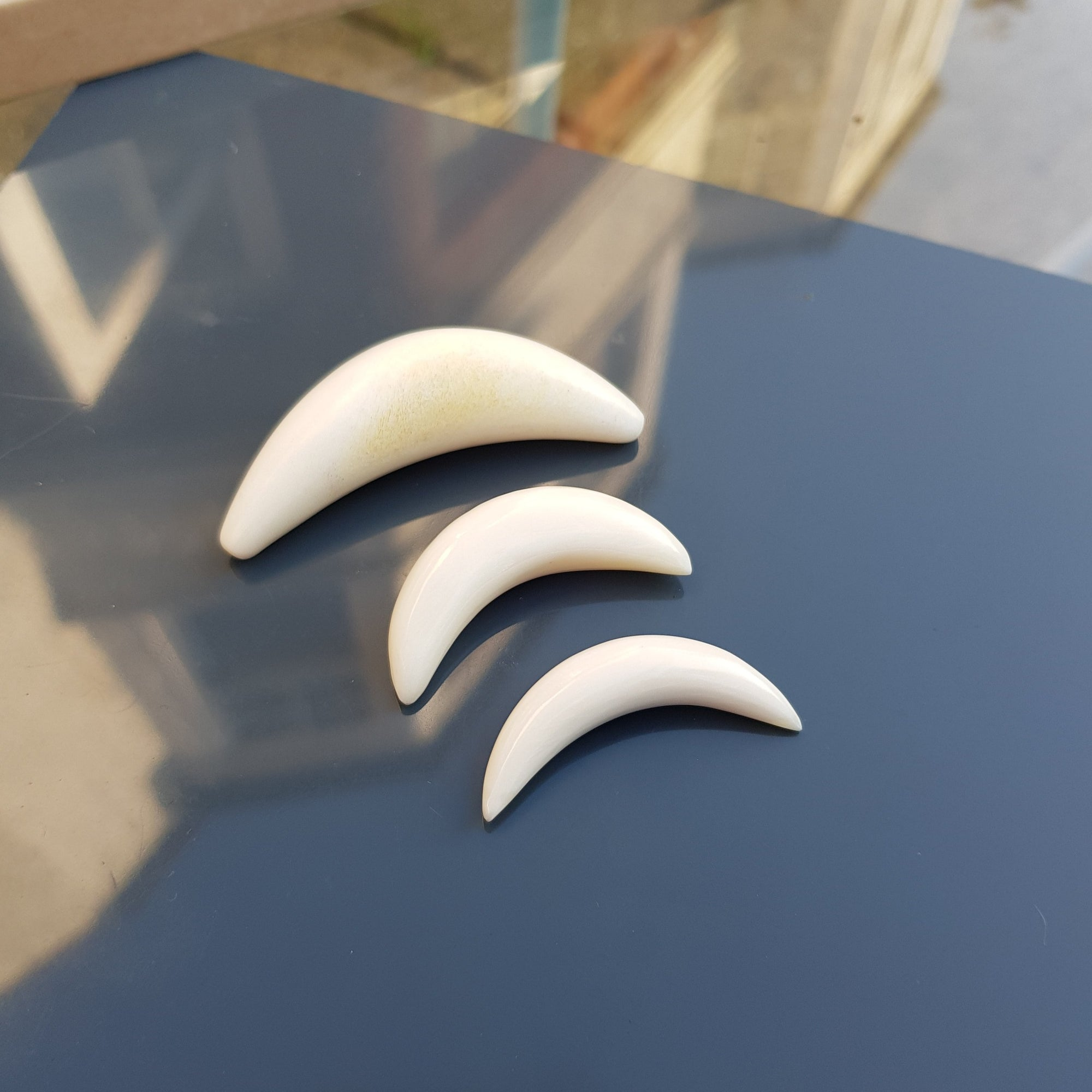 Large Curved Buffalo Bone Septum Tusk