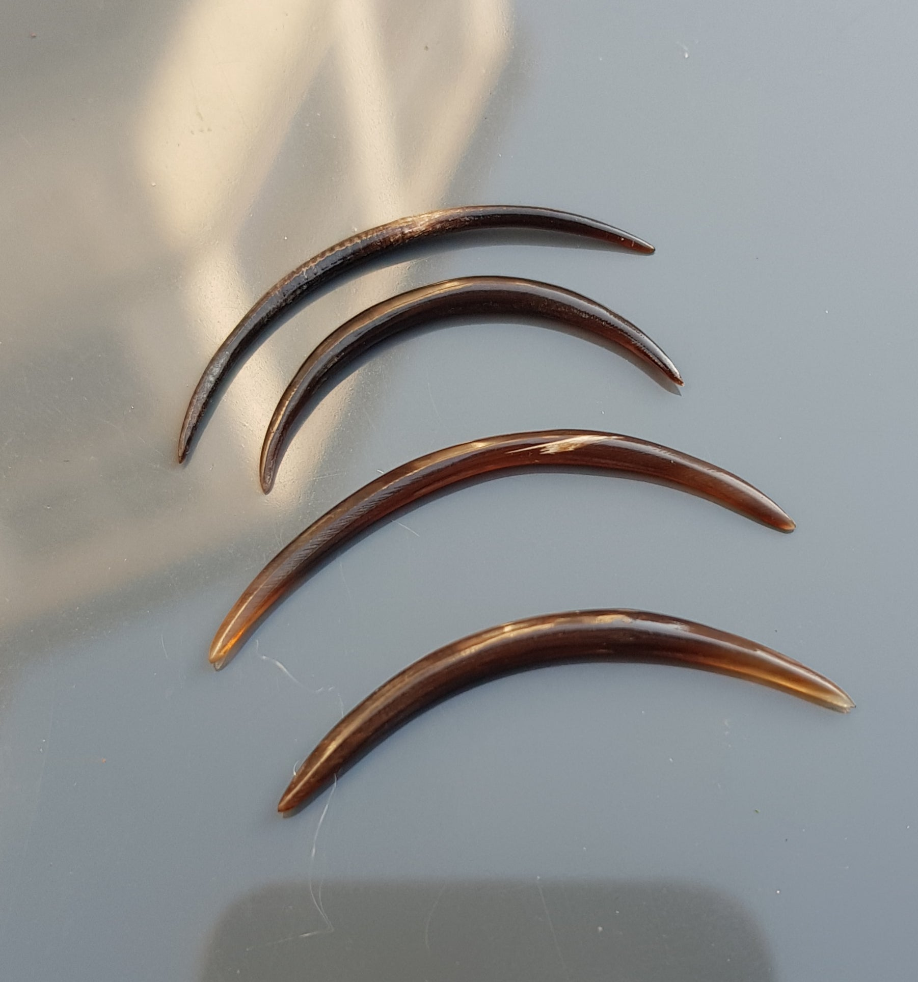 Small Curved Tusks | Buffalo Horn