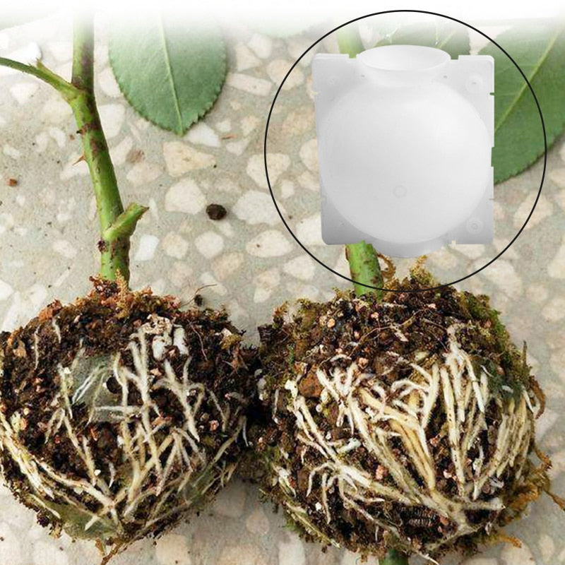 5pcs Plant Rooting Ball