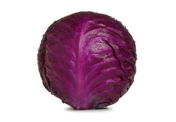 Cabbage Red Certified Organic