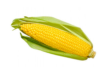 Corn (Sweet) Green Husk each Certified Organic