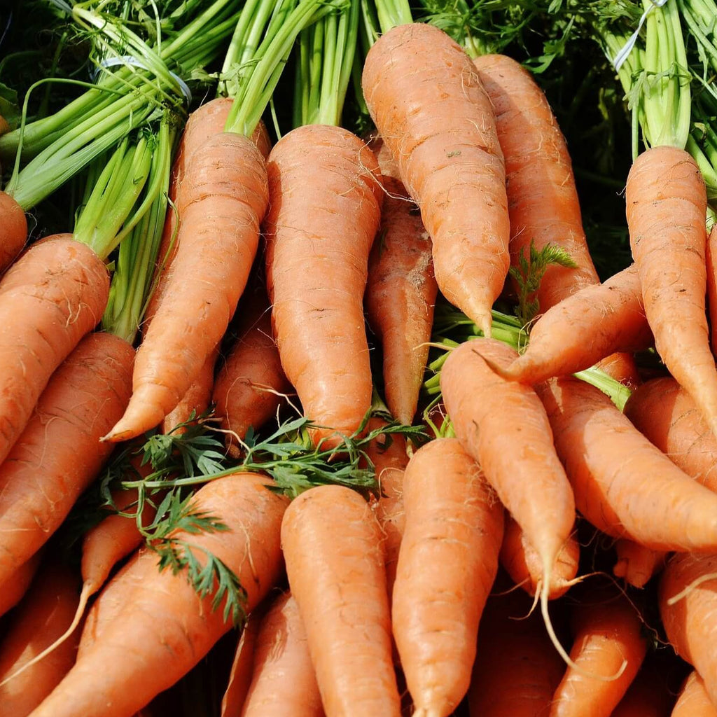 Organic Carrot - Autumn King - Vegetable Seeds