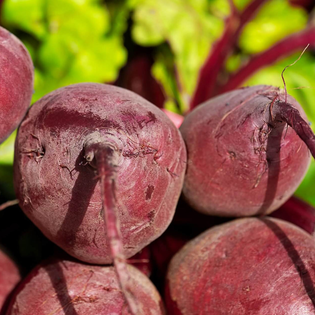 Beetroot - Detroit - Organic Vegetable Seeds - SeedSloth