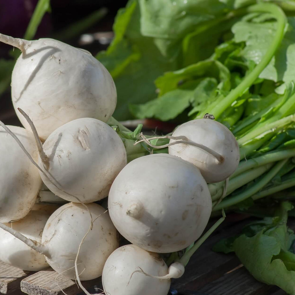 Turnip - Tokyo Cross F1 - Vegetable Seeds