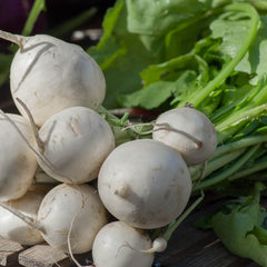 Turnip Vegetable Seeds to Grow at Home