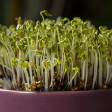 Load image into Gallery viewer, Cress - My Little Grow Kit