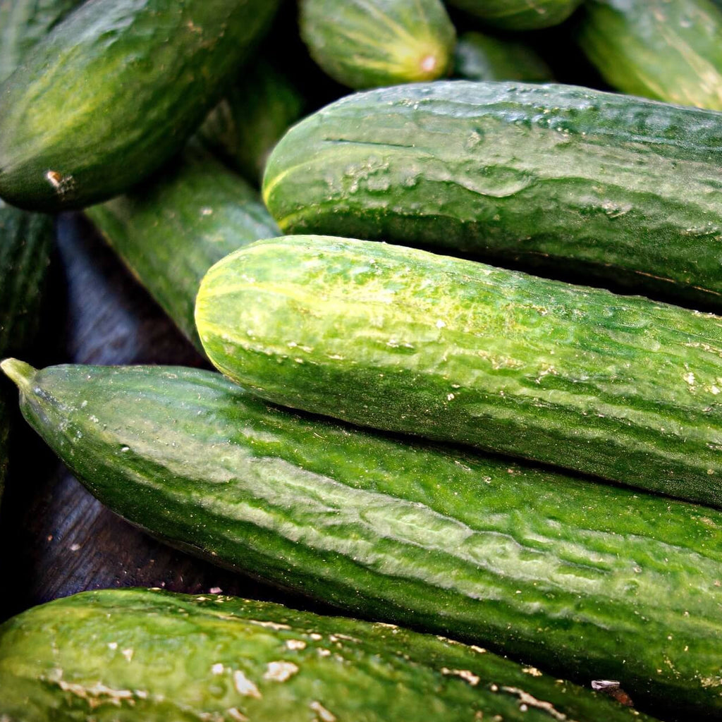 Cucumber - Perfection - Vegetable Seeds