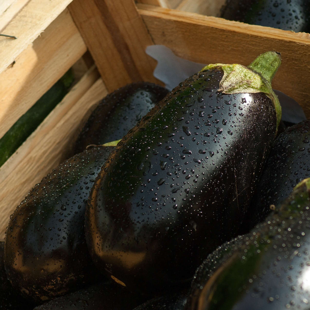 Aubergine - Black Beauty - Vegetable Seeds - seedsloth.com