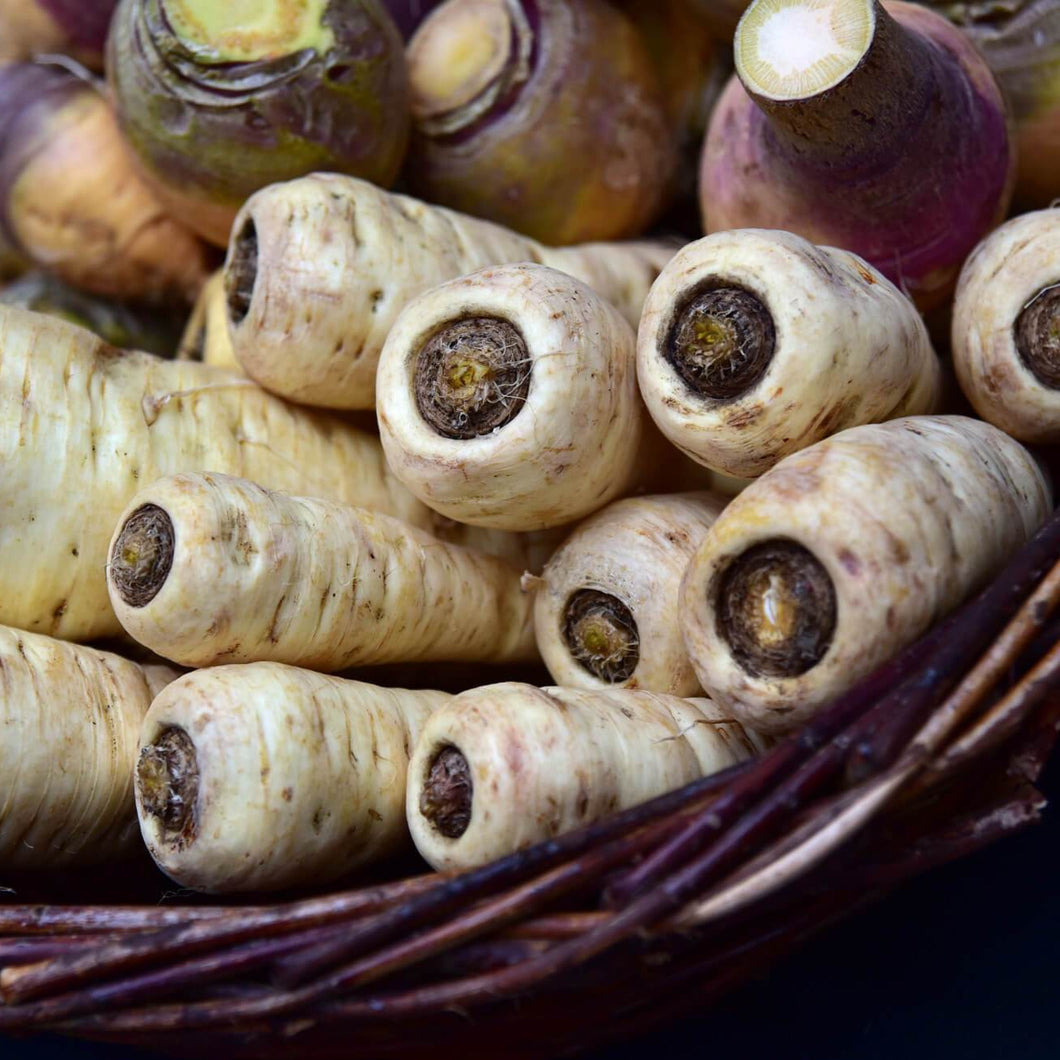 Parsnip - Countess F1 - Vegetable Seeds - seedsloth.com