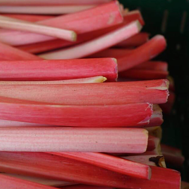 Rhubarb - Victoria - Vegetable Seeds - seedsloth.com