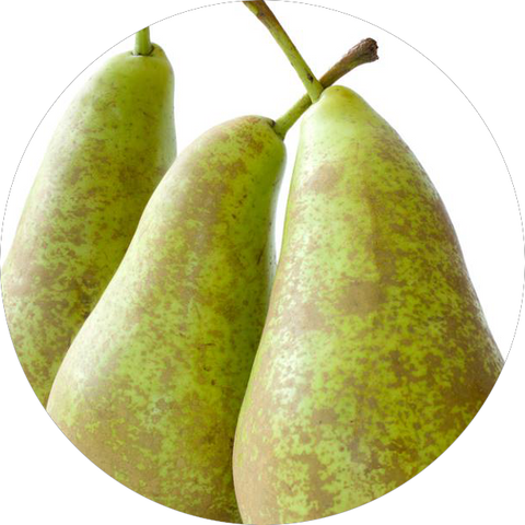 ENGLISH CONFERENCE PEARS (x4)