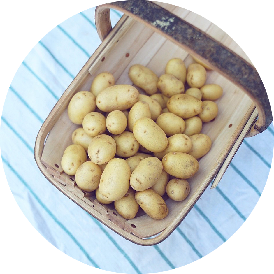 CHARLOTTE POTATOES 500g