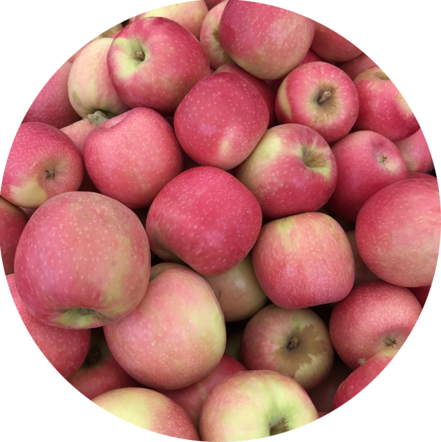APPLES - PINK LADY (x4)