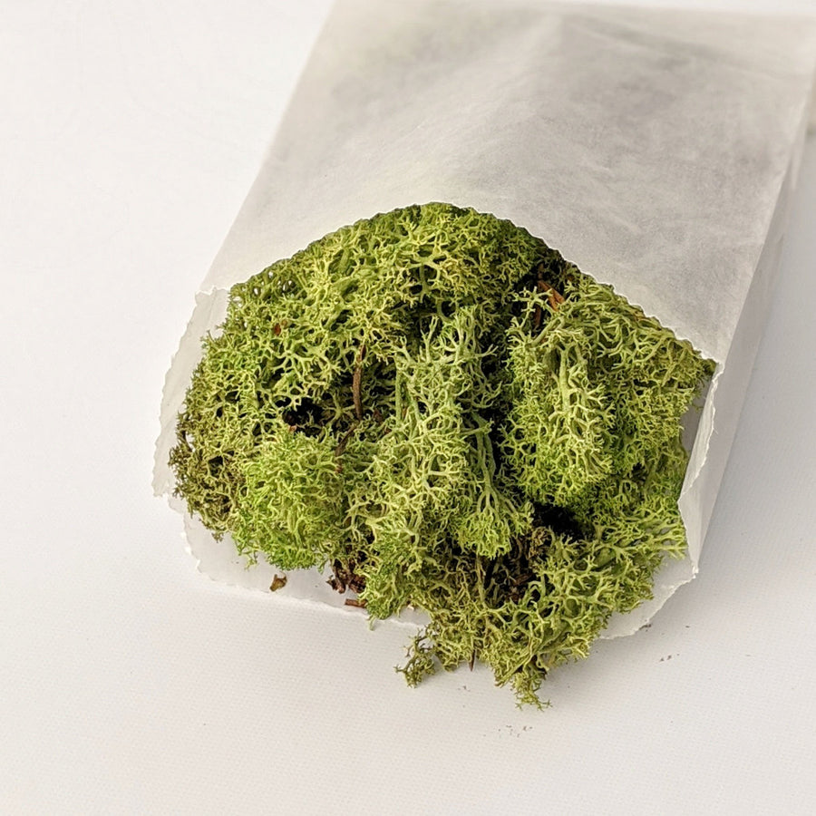 Green Reindeer Floristry Moss - The Danes