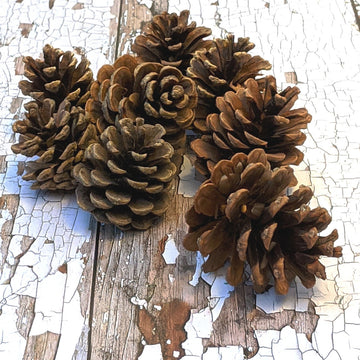 Natural Pine Cones - The Danes