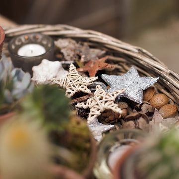 Natural Birch Bark & Wooden Star Decorative Accessories - The Danes