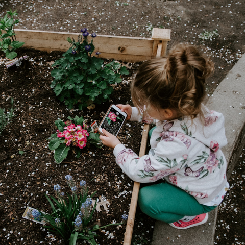 little girl crouches over a flower in a garden bed taking a picture with a smartphone