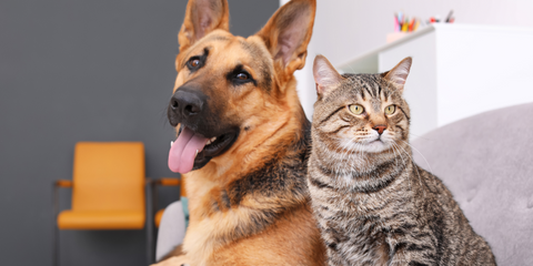 Kidney disease in dogs and cats