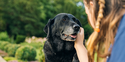 How to look after an older dog