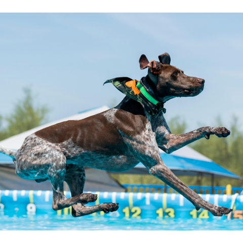 Dock diving for dogs