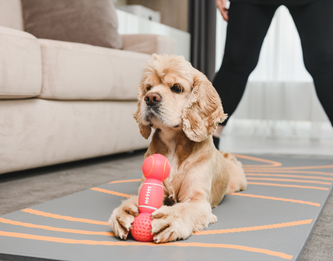 Keeping your pet occupied when left alone