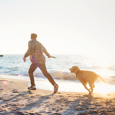 What do I need to take my dog on holiday?