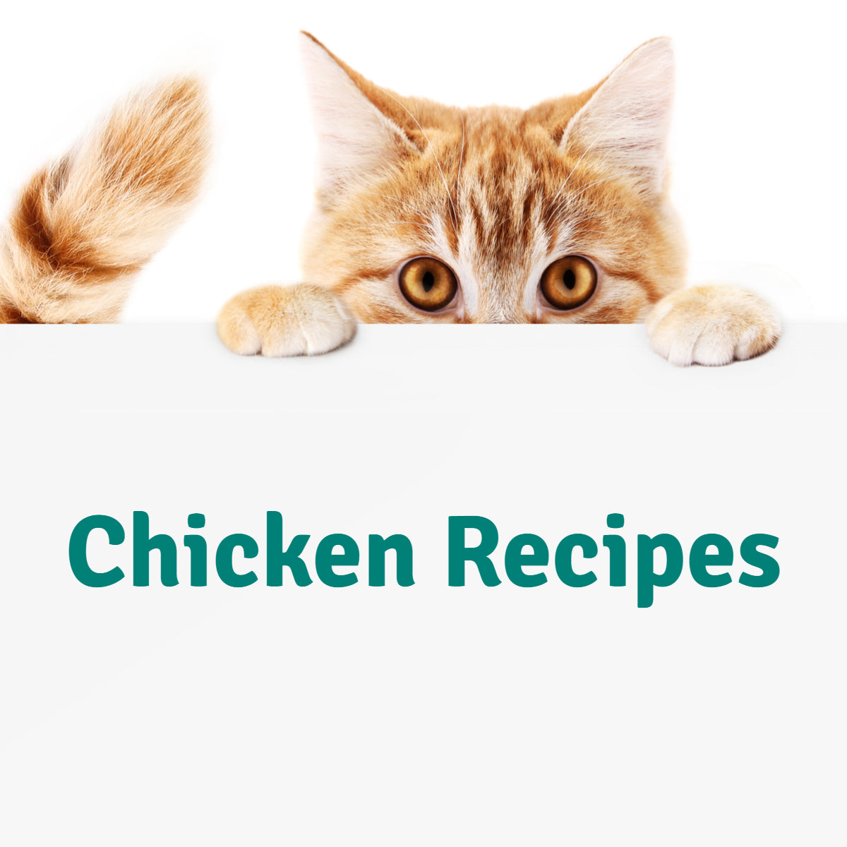 Chicken Recipes for Cats