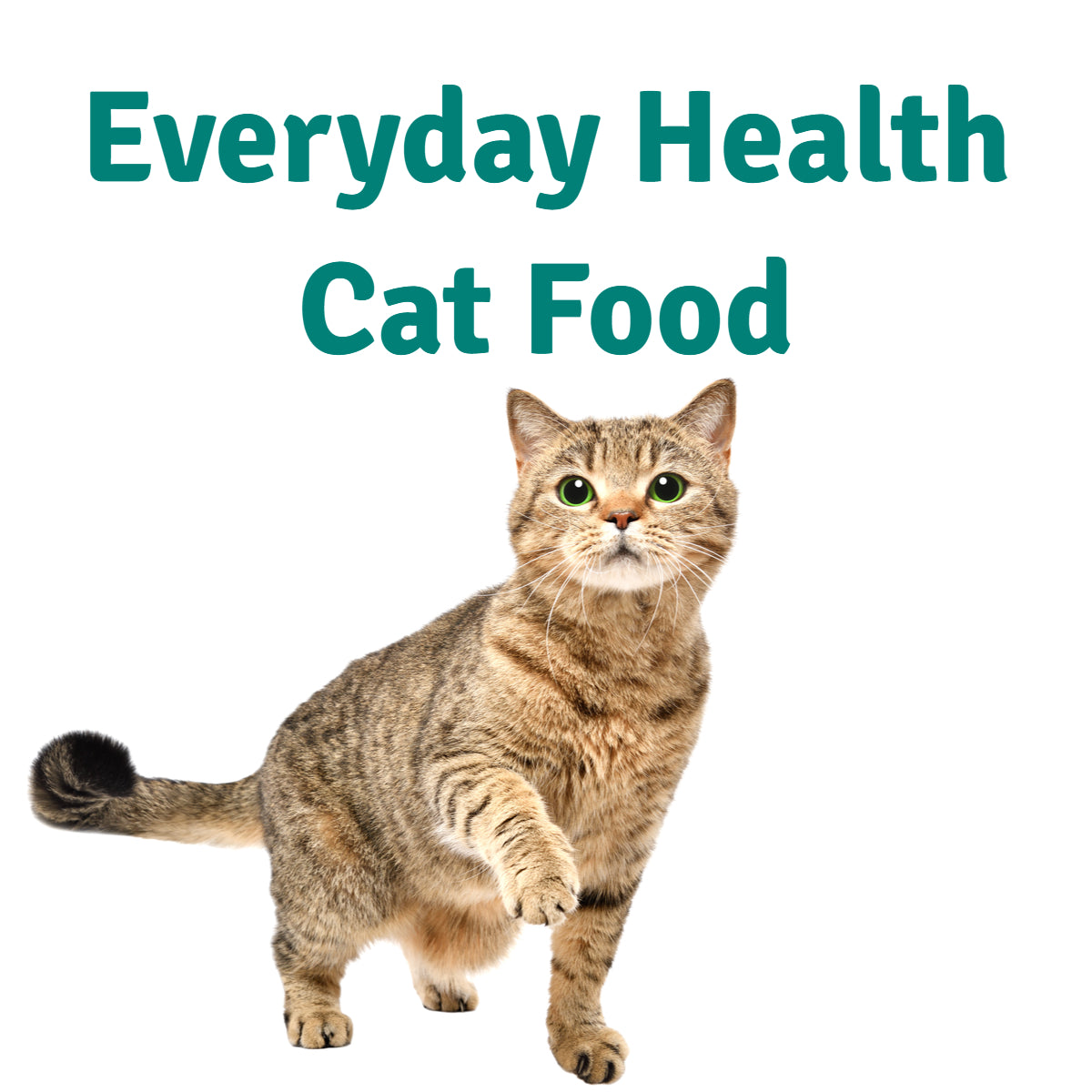 Everyday Food for Cats