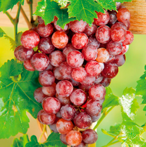 Punnet of grapes 500g