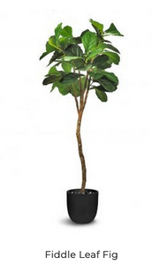 FIG TREE ARTIFICAL TREE 180CM