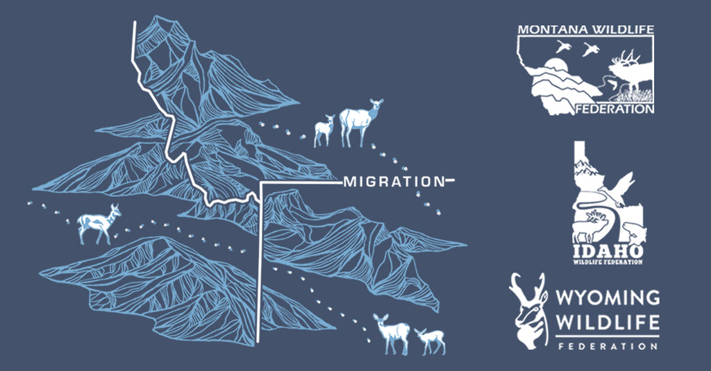 Celebrating Wildlife Migrations