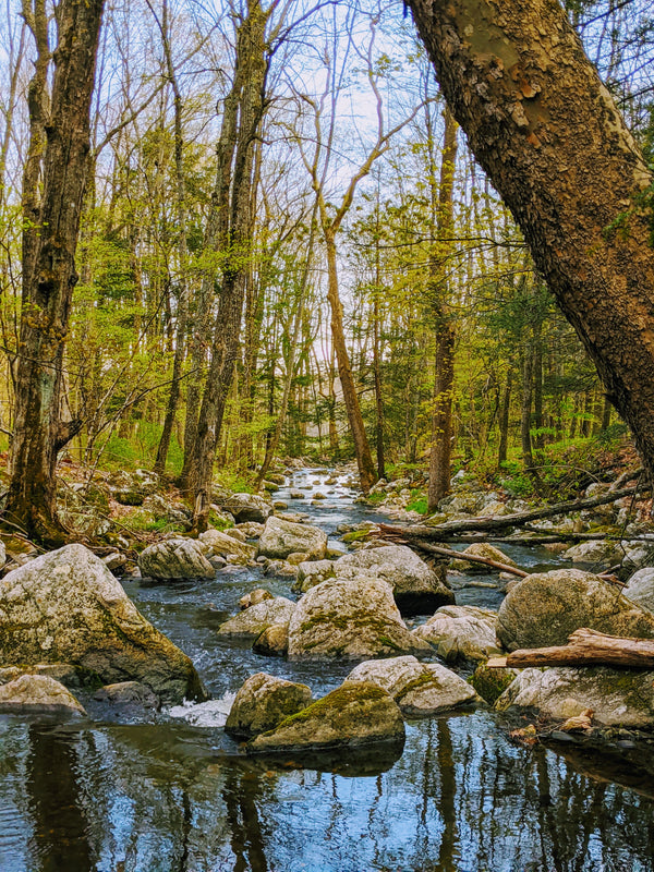Notes from a New England Brook