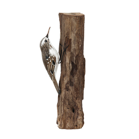 Treecreeper on Tree Stump from Archipelago