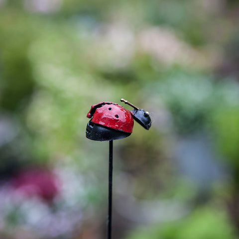 Ladybird on Stick Garden Decoration