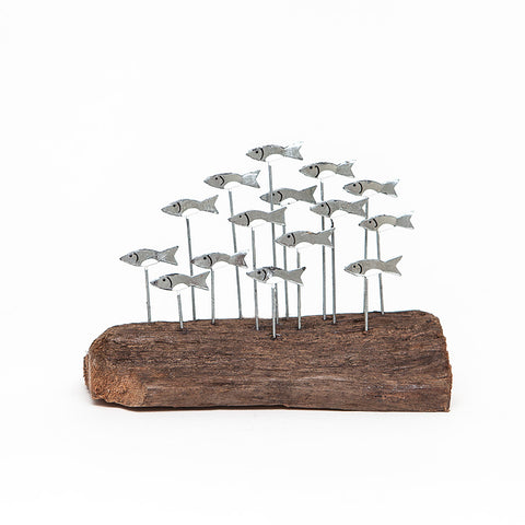 Shoeless Joe School of Sprats on Driftwood