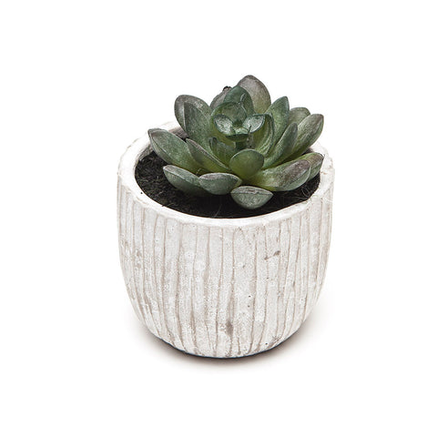 Gisela Graham Mini Round Leaf Succulent in Pot