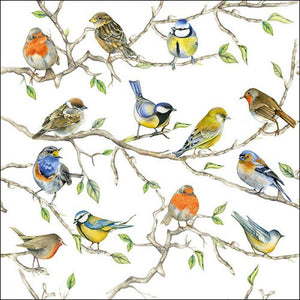 Napkins 33x33cm Birds Meeting Buy Instore or online at beattys.ie