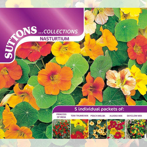 SUTTONS NASTURIUM COLLECTION 139827 - Beattys of Loughrea , www.beattys.ie