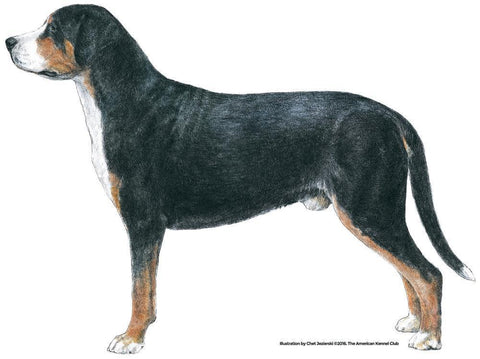 Greater Swiss Mountain Dog Products Akc Shop