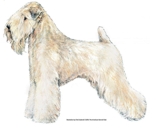 Soft Coated Wheaten Terrier Products | AKC Shop