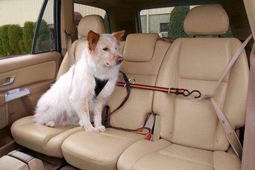 Dog Car Zip Line Tether With Dog Leash And Carabiner