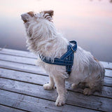 Casual Padded Dog Harness