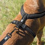 Hurtta Padded Dog Y-Harness 2